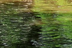 10_Fluss_Lahn_20100613nr039a_www