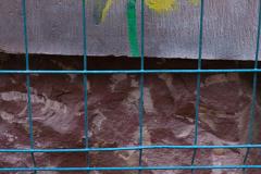 002_Loewenzahn_Graffiti_www